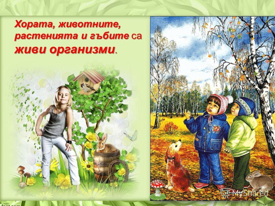 Хората, животните, растенията и гъбите са живи организми.