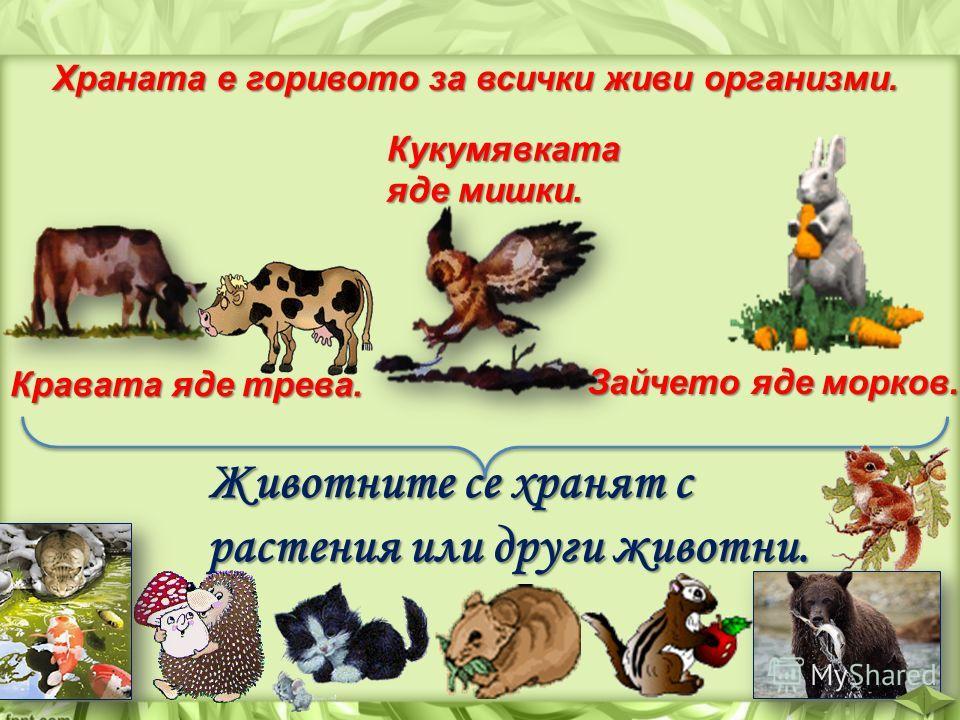 Храната е горивото за всички живи организми. Кравата яде трева. Кукумявката яде мишки. Зайчето яде морков. Животните се хранят с растения или други животни.