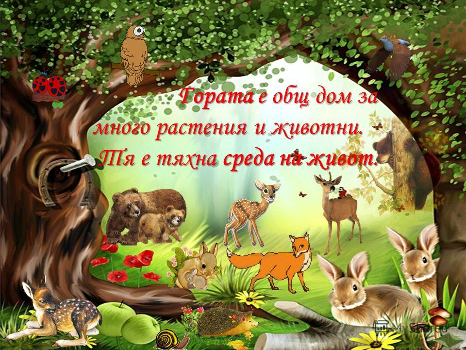 Гората е общ дом за много растения и животни. Гората е общ дом за много растения и животни. Тя е тяхна среда на живот. Тя е тяхна среда на живот.