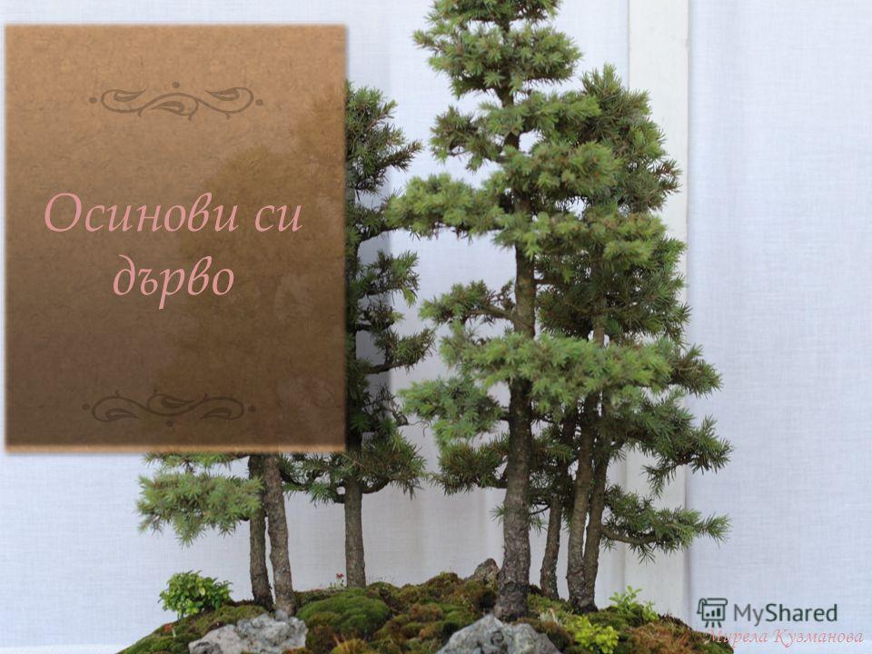 Осинови си дърво Мирела Кузманова