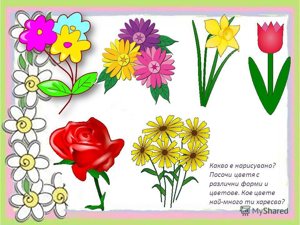 Какво е нарисувано? Посочи цветя с различни форми и цветове. Кое цвете най-много ти харесва?