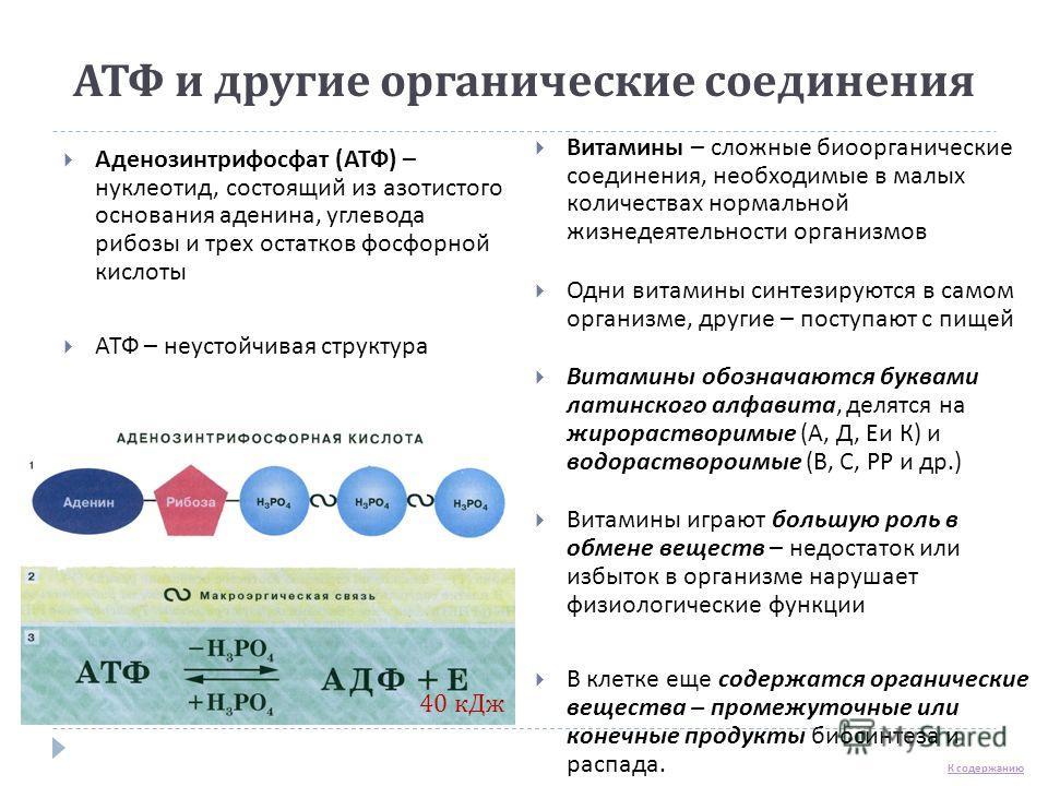 АТФ и другие органические соединения Аденозинтрифосфат ( АТФ ) – нуклеотид, состоящий из азотистого основания аденина, углевода рибозы и трех остатков фосфорной кислоты АТФ – неустойчивая структура Витамины – сложные биоорганические соединения, необх