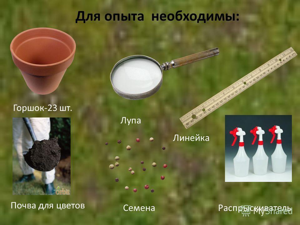 Для опыта необходимы: Горшок-23 шт. Линейка Семена Лупа Почва для цветов Распрыскиватель