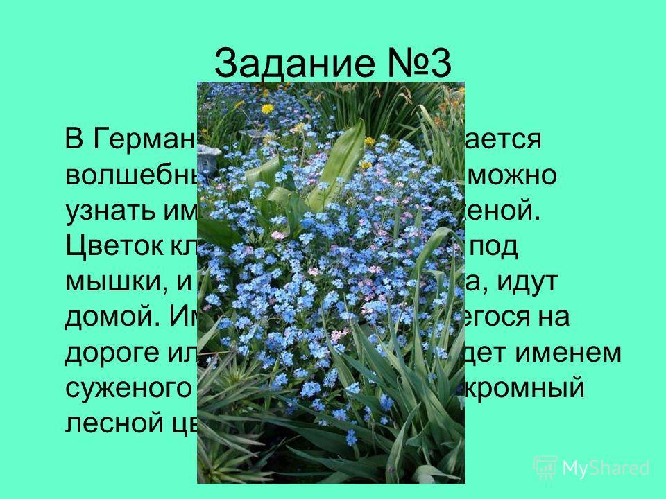 Задание 3 В Германии этот цветок считается волшебным. С его помощью можно узнать имя суженого или суженой. Цветок кладут на голое тело под мышки, и, не говоря ни слова, идут домой. Имя первого попавшегося на дороге или перекрёстке и будет именем суже