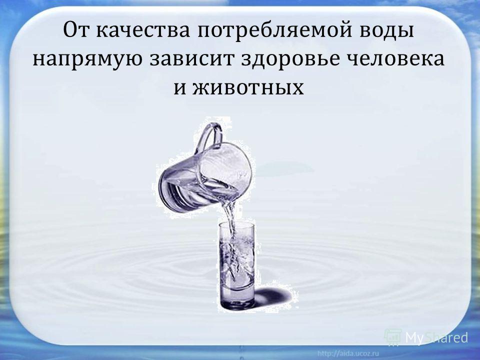 От качества потребляемой воды напрямую зависит здоровье человека и животных
