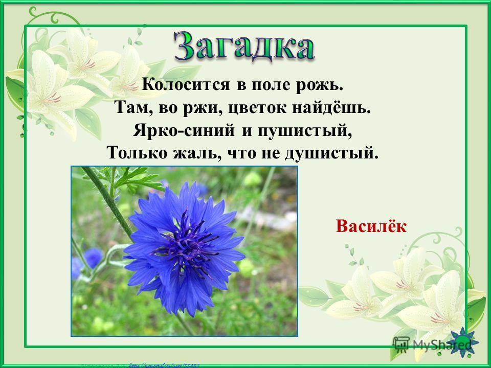 Матюшкина А.В. http://nsportal.ru/user/33485http://nsportal.ru/user/33485 С=Ш Ромашка,,