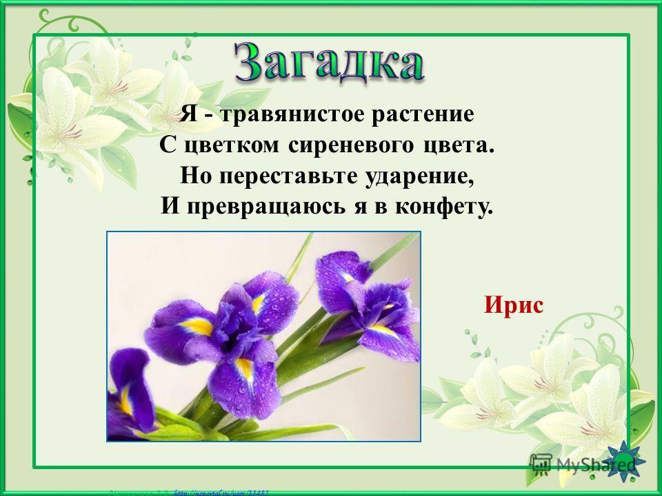 Матюшкина А.В. http://nsportal.ru/user/33485http://nsportal.ru/user/33485 Колосится в поле рожь. Там, во ржи, цветок найдёшь. Ярко-синий и пушистый, Только жаль, что не душистый. Василёк