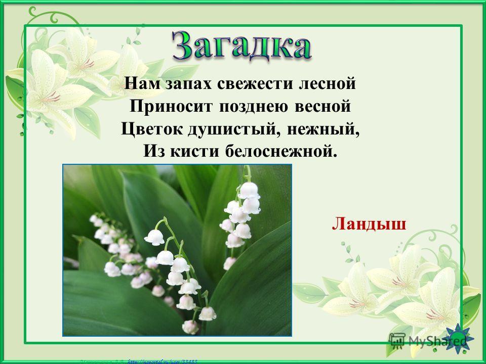 Матюшкина А.В. http://nsportal.ru/user/33485http://nsportal.ru/user/33485 Я - травянистое растение С цветком сиреневого цвета. Но переставьте ударение, И превращаюсь я в конфету. Ирис
