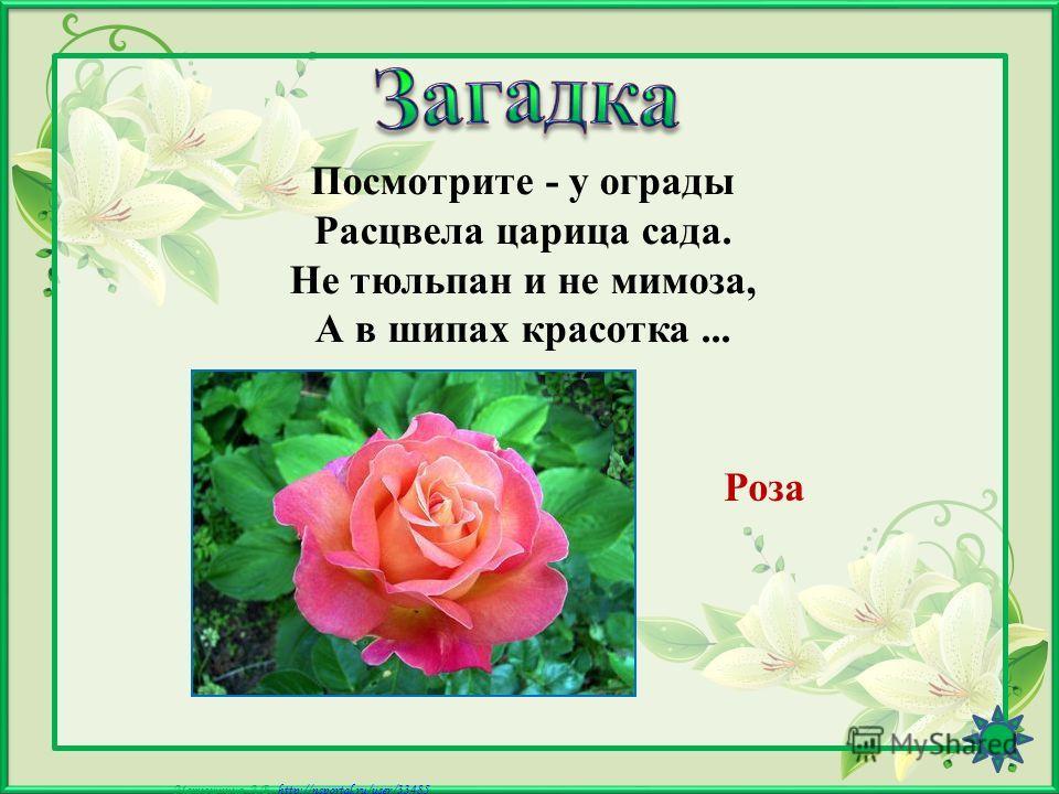 Матюшкина А.В. http://nsportal.ru/user/33485http://nsportal.ru/user/33485 Из луковки вырос, Но в пищу негож. На яркий стаканчик Цветок тот похож. Тюльпан