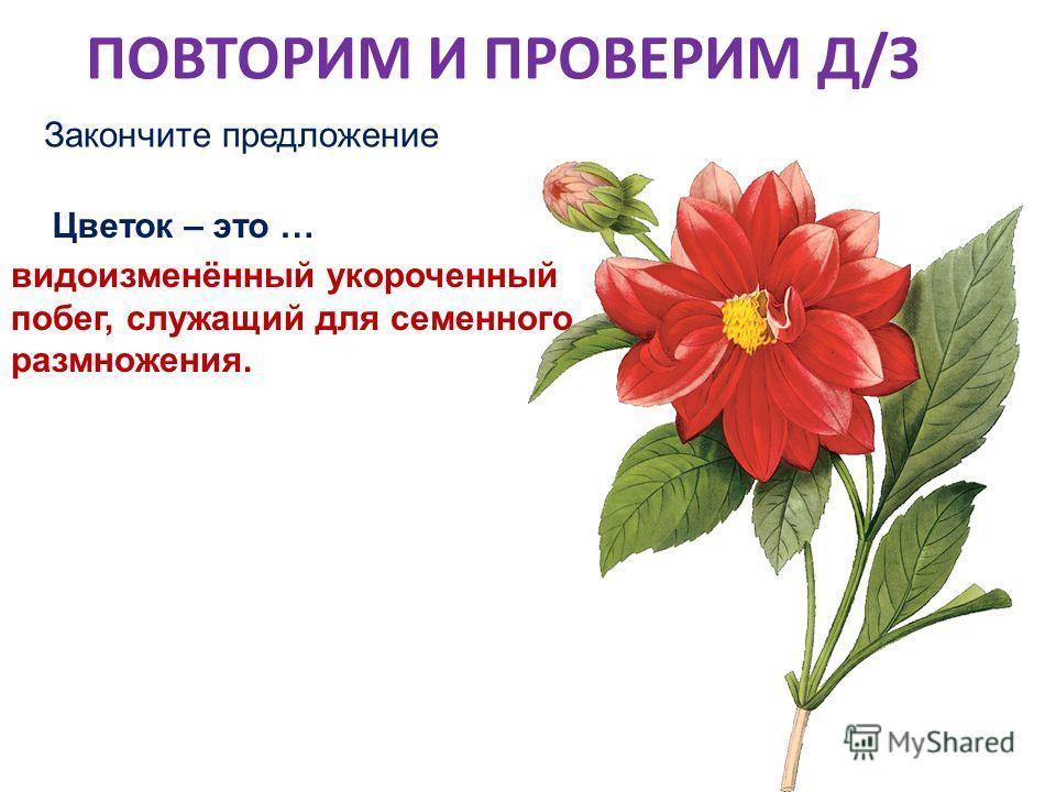 ПОВТОРИМ И ПРОВЕРИМ Д/З Закончите предложение Цветок – это … видоизменённый укороченный побег, служащий для семенного размножения.