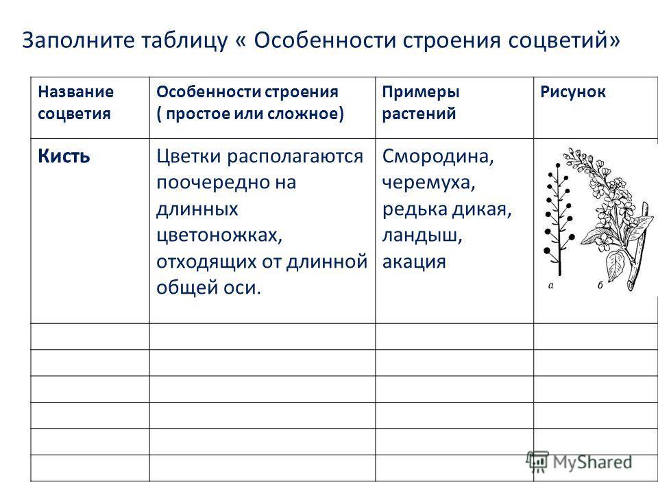 Заполните таблицу « Особенности строения соцветий» Название соцветия Особенности строения ( простое или сложное) Примеры растений Рисунок КистьЦветки располагаются поочередно на длинных цветоножках, отходящих от длинной общей оси. Смородина, черемуха