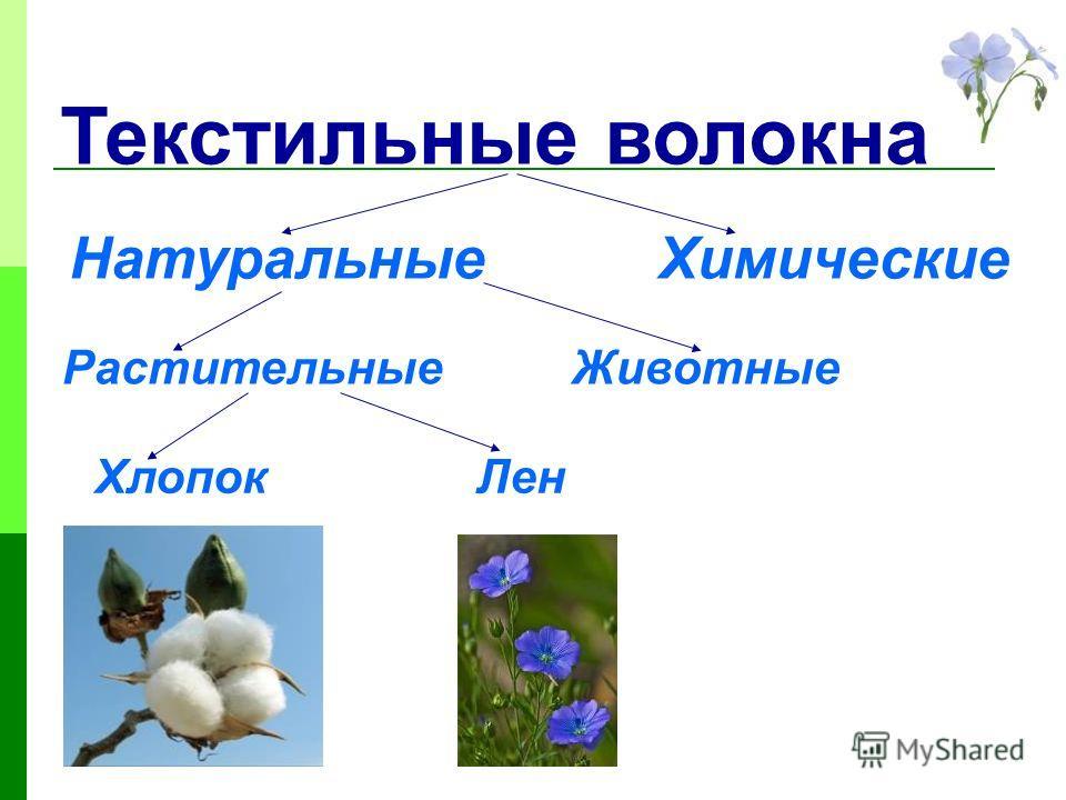Текстильные волокна НатуральныеХимические РастительныеЖивотные ХлопокЛен