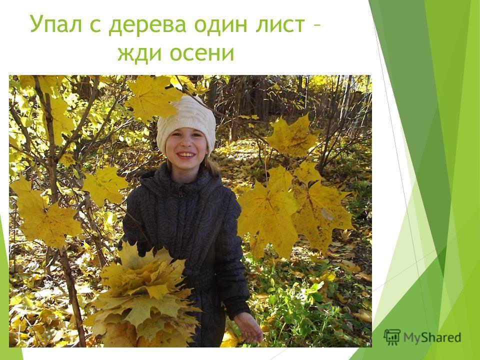 Упал с дерева один лист – жди осени
