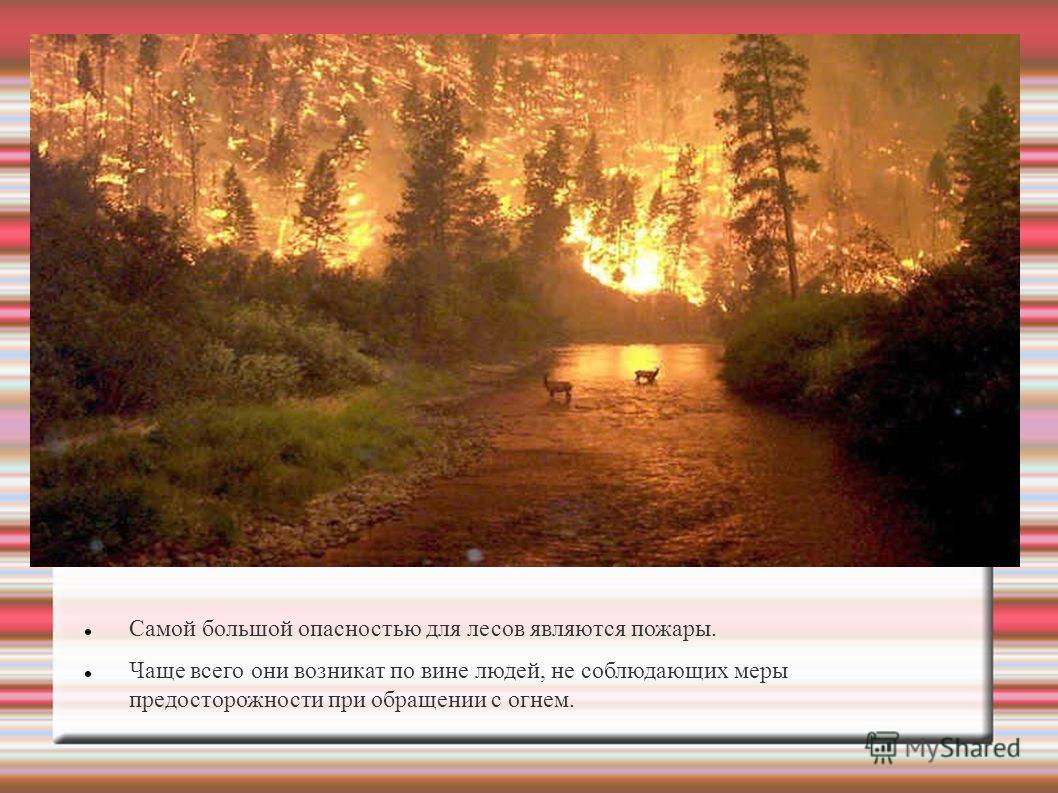 Самой большой опасностью для лесов являются пожары. Чаще всего они возникат по вине людей, не соблюдающих меры предосторожности при обращении с огнем.