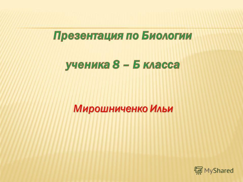 Мирошниченко Ильи