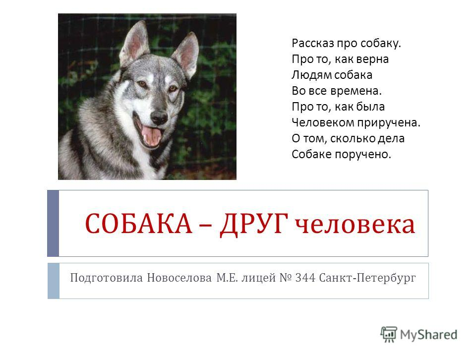 СОБАКА – ДРУГ человека Подготовила Новоселова М. Е. лицей 344 Санкт - Петербург Рассказ про собаку. Про то, как верна Людям собака Во все времена. Про то, как была Человеком приручена. О том, сколько дела Собаке поручено.