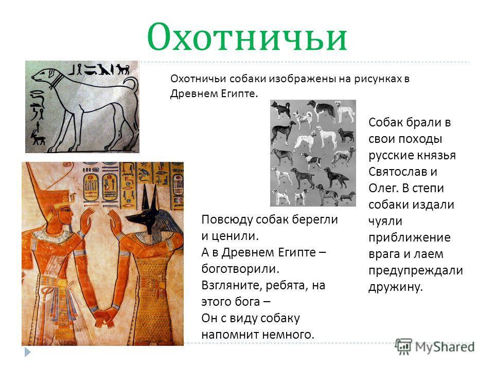 Охотничьи Повсюду собак берегли и ценили. А в Древнем Египте – боготворили. Взгляните, ребята, на этого бога – Он с виду собаку напомнит немного. Охотничьи собаки изображены на рисунках в Древнем Египте. Собак брали в свои походы русские князья Свято