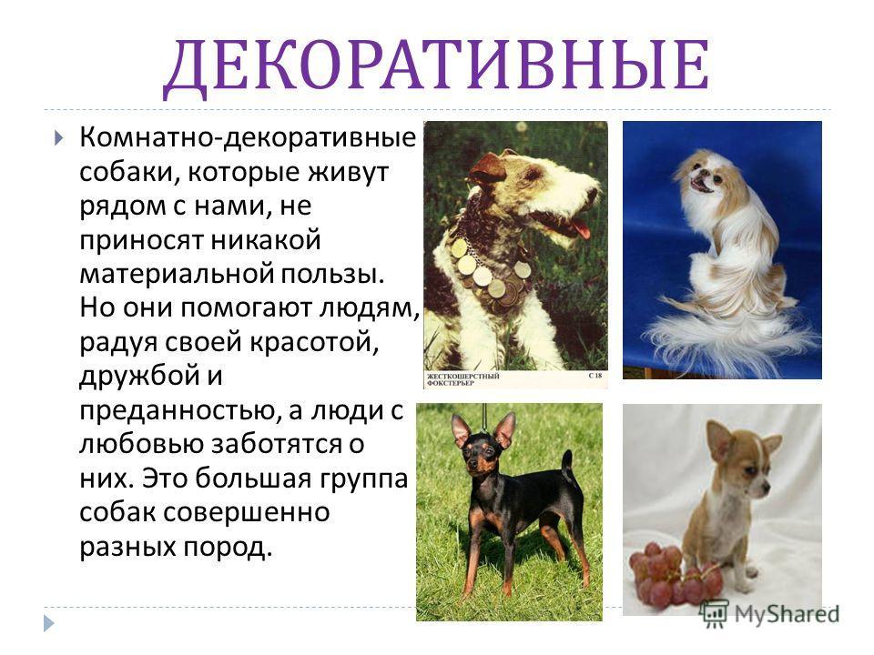 ДЕКОРАТИВНЫЕ Комнатно - декоративные собаки, которые живут рядом с нами, не приносят никакой материальной пользы. Но они помогают людям, радуя своей красотой, дружбой и преданностью, а люди с любовью заботятся о них. Это большая группа собак совершен