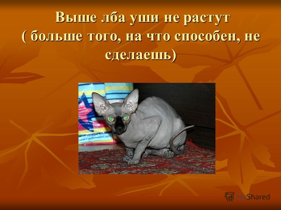 Выше лба уши не растут ( больше того, на что способен, не сделаешь) Выше лба уши не растут ( больше того, на что способен, не сделаешь)