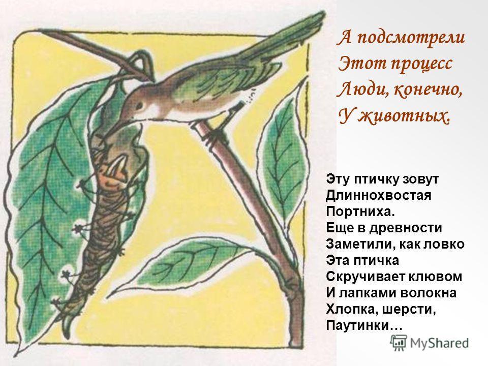 А подсмотрели Этот процесс Люди, конечно, У животных. Эту птичку зовут Длиннохвостая Портниха. Еще в древности Заметили, как ловко Эта птичка Скручивает клювом И лапками волокна Хлопка, шерсти, Паутинки…