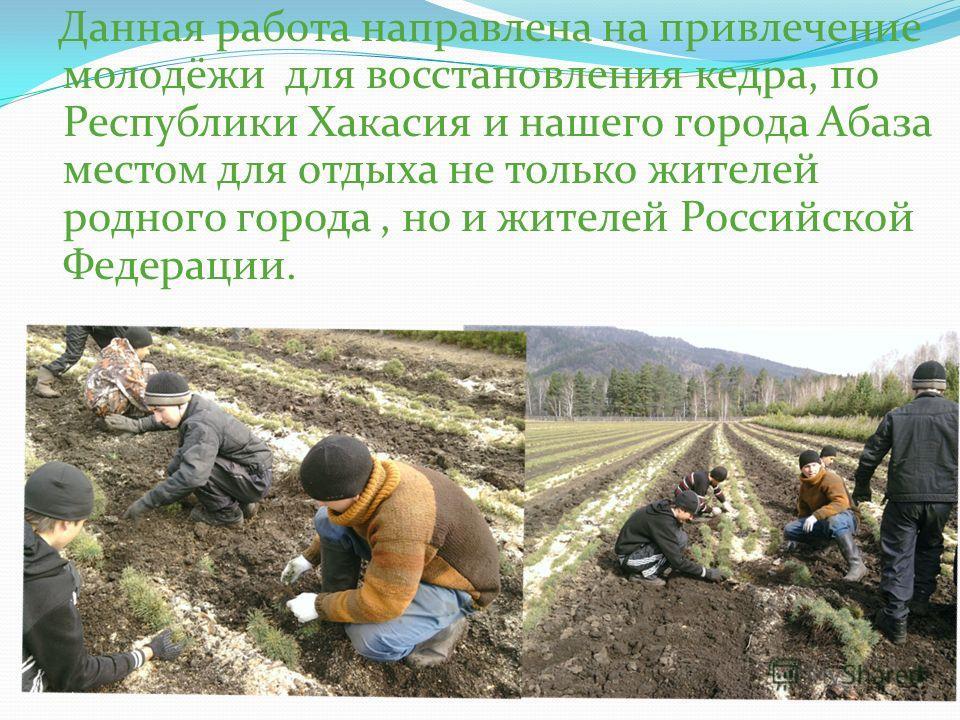 Данная работа направлена на привлечение молодёжи для восстановления кедра, по Республики Хакасия и нашего города Абаза местом для отдыха не только жителей родного города, но и жителей Российской Федерации.
