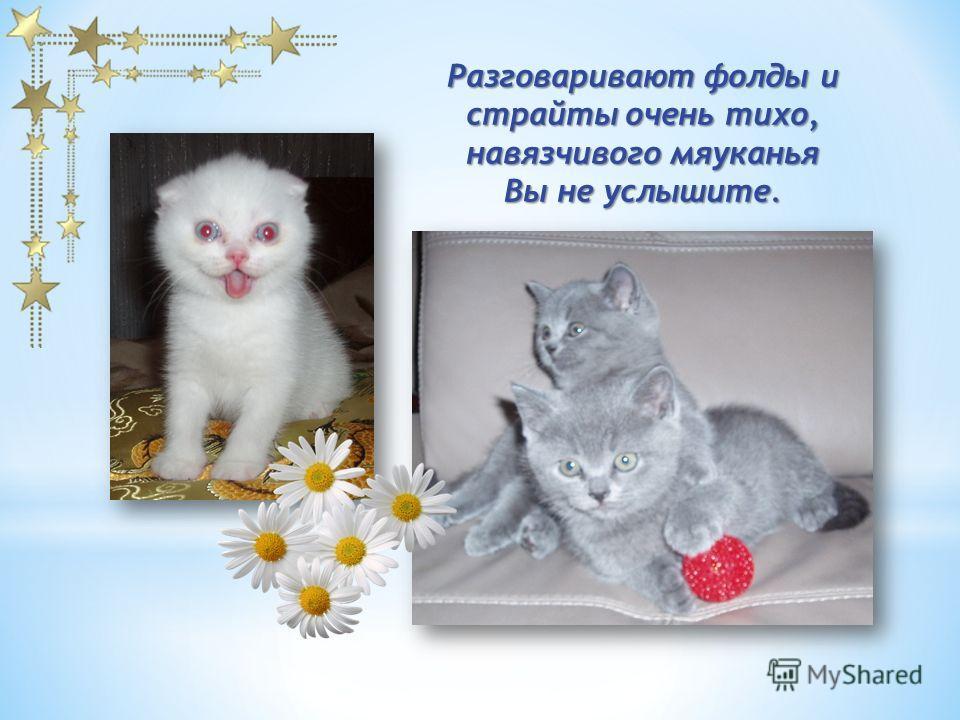 Никогда не царапаются и не кусаются. Это идеальные кошки для тех, кто любит спокойных животных с необычной внешностью.