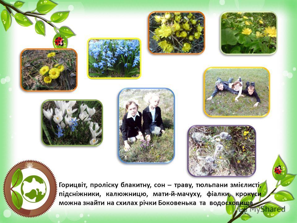 Горицвіт, проліску блакитну, сон – траву, тюльпани змієлисті, підсніжники, калюжницю, мати-й-мачуху, фіалки, крокуси можна знайти на схилах річки Боковенька та водосховища