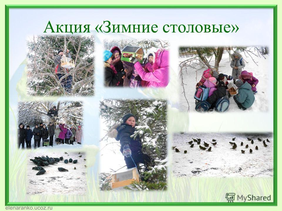 Акция «Зимние столовые»