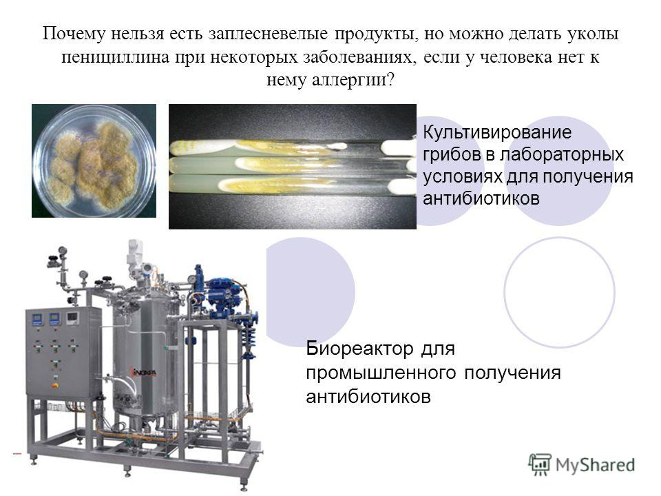 Почему нельзя есть заплесневелые продукты, но можно делать уколы пенициллина при некоторых заболеваниях, если у человека нет к нему аллергии? Культивирование грибов в лабораторных условиях для получения антибиотиков Биореактор для промышленного получ