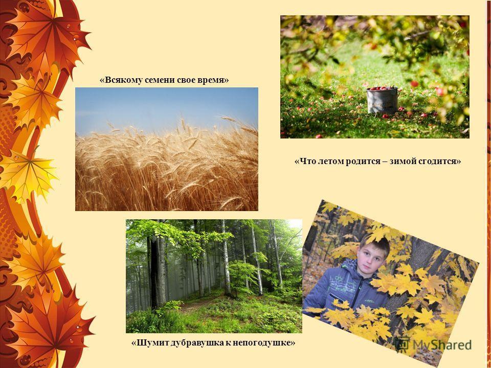 «Всякому семени свое время» «Что летом родится – зимой сгодится» «Шумит дубравушка к непогодушке»