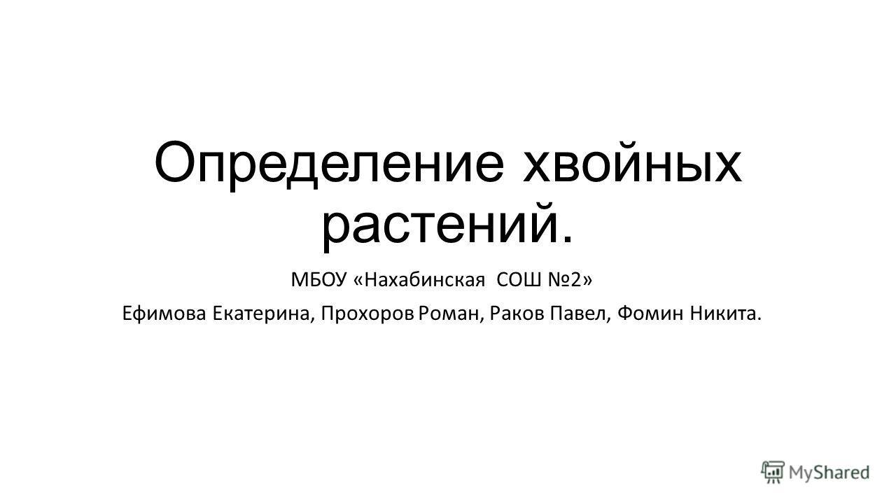 Определение хвойных растений. МБОУ «Нахабинская СОШ 2» Ефимова Екатерина, Прохоров Роман, Раков Павел, Фомин Никита.