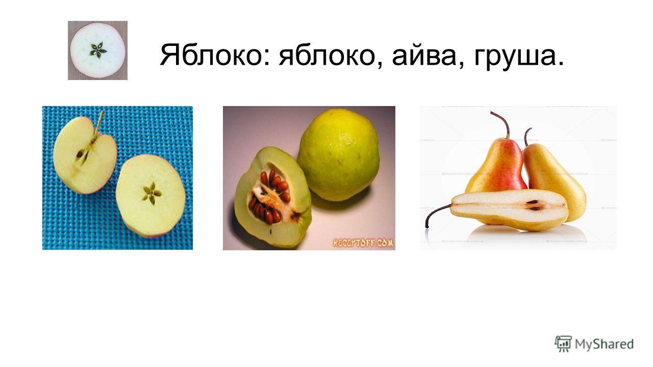 Яблоко: яблоко, айва, груша.