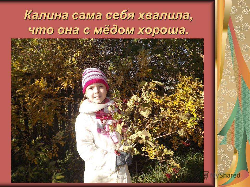 Калина сама себя хвалила, что она с мёдом хороша.