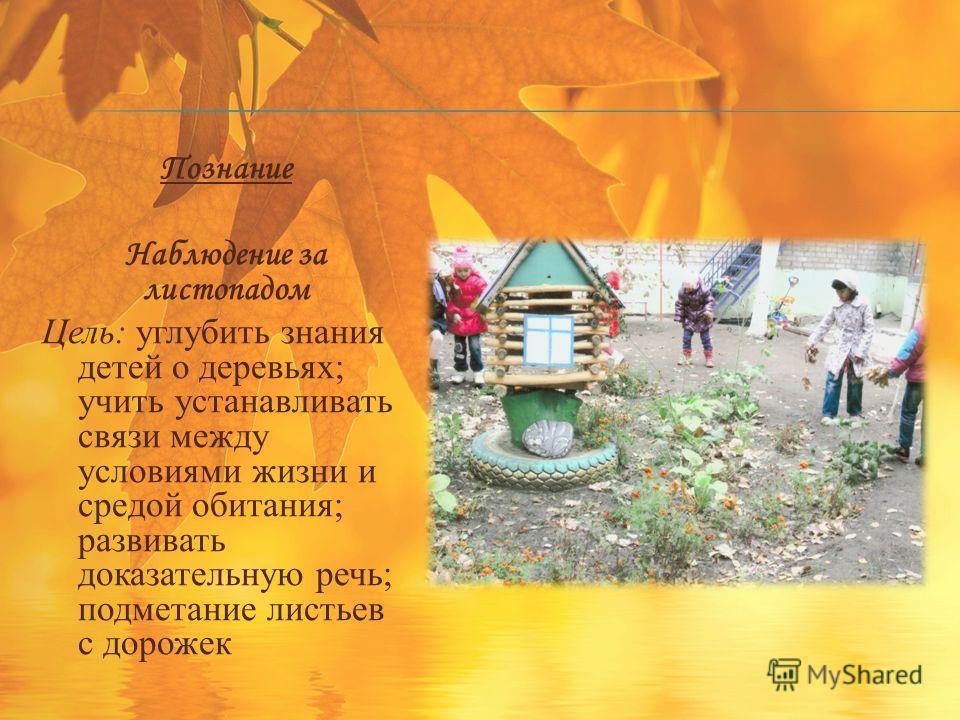Познание Наблюдение за листопадом Цель: углубить знания детей о деревьях; учить устанавливать связи между условиями жизни и средой обитания; развивать доказательную речь; подметание листьев с дорожек