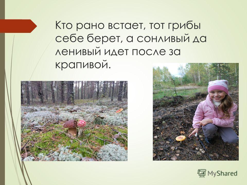 Кто рано встает, тот грибы себе берет, а сонливый да ленивый идет после за крапивой.