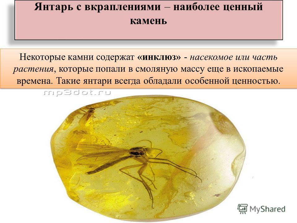 Янтарь с вкраплениями – наиболее ценный камень Некоторые камни содержат «инклюз» - насекомое или часть растения, которые попали в смоляную массу еще в ископаемые времена. Такие янтари всегда обладали особенной ценностью.