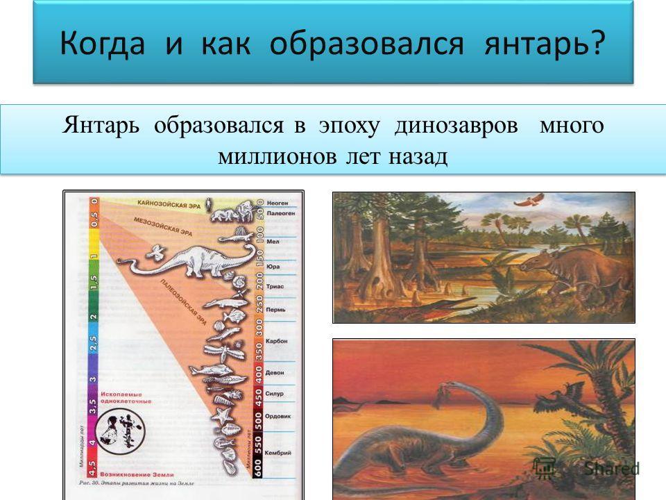 Когда и как образовался янтарь? Янтарь образовался в эпоху динозавров много миллионов лет назад