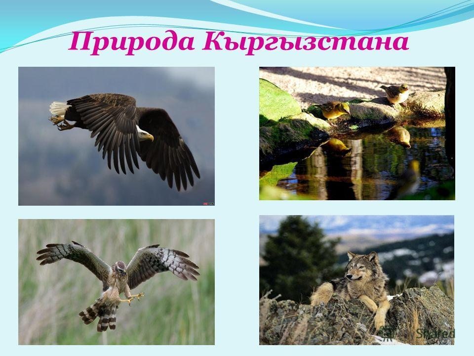 Природа Кыргызстана