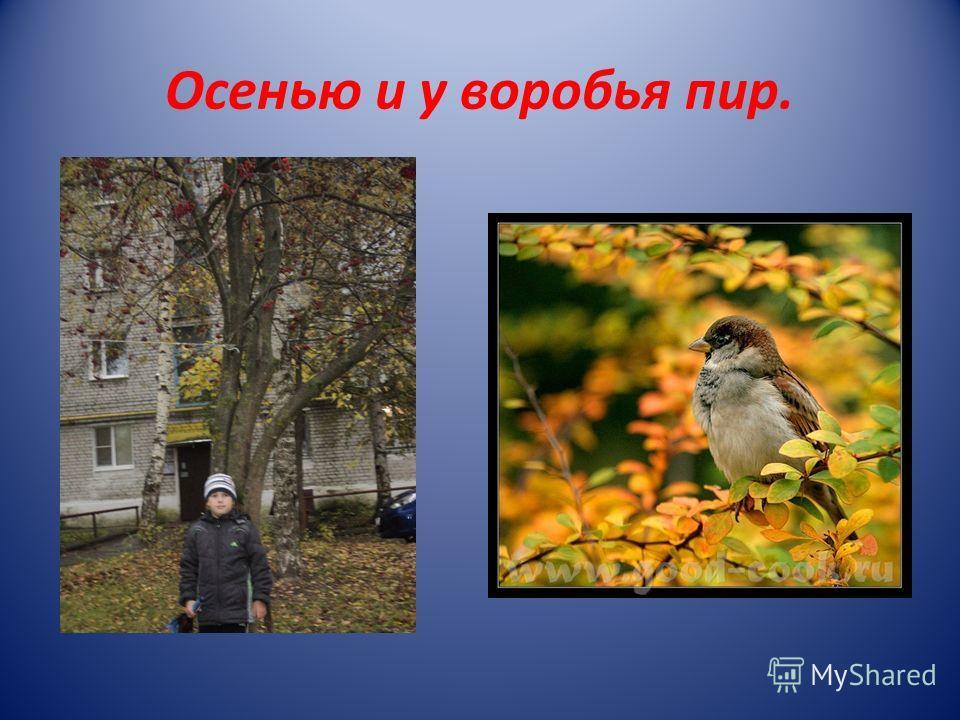 Осенью и у воробья пир.