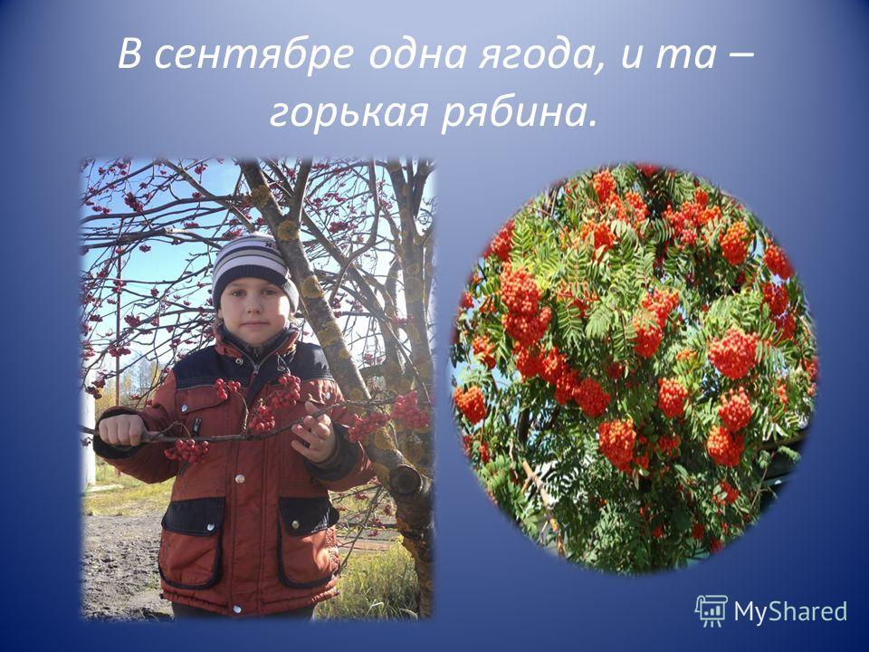 В сентябре одна ягода, и та – горькая рябина.