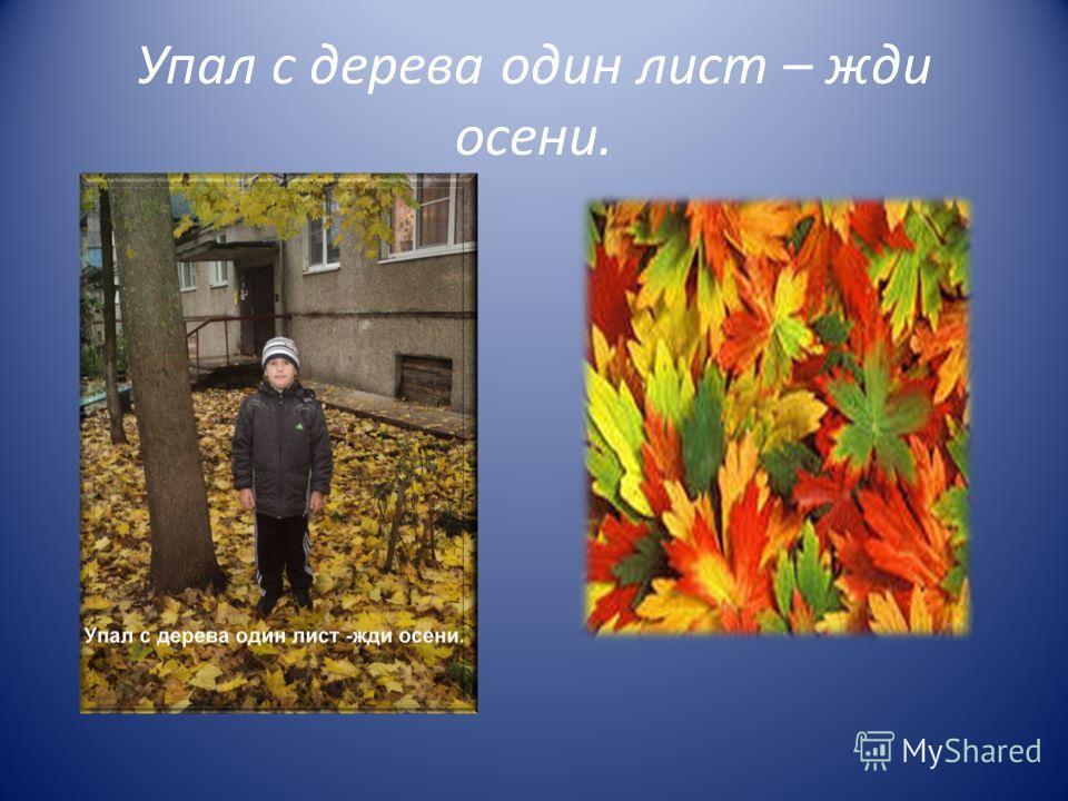 Упал с дерева один лист – жди осени.