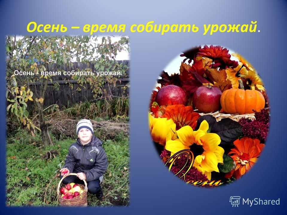Осень – время собирать урожай.