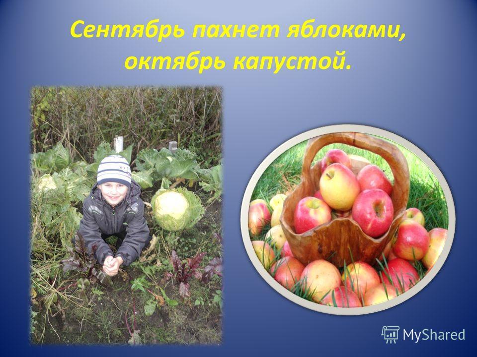 Сентябрь пахнет яблоками, октябрь капустой.