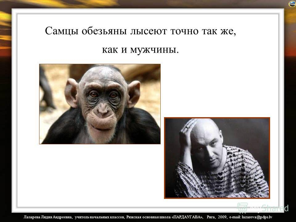 Лазарева Лидия Андреевна, учитель начальных классов, Рижская основная школа «ПАРДАУГАВА», Рига, 2009, e-mail: lazareva@pdps.lv Самцы обезьяны лысеют точно так же, как и мужчины.