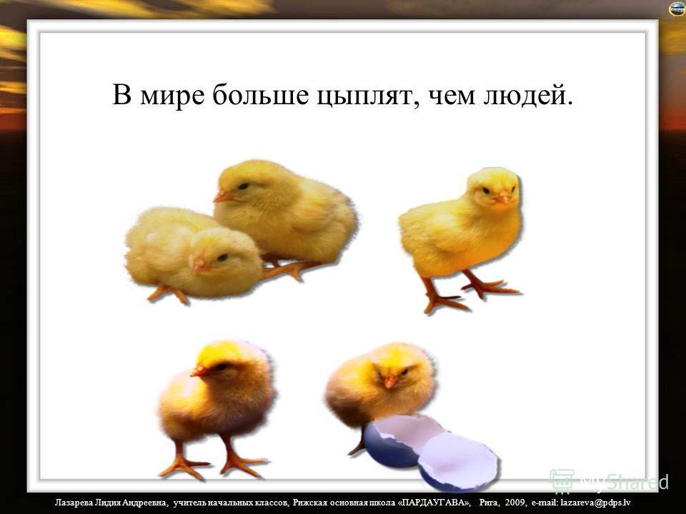 Лазарева Лидия Андреевна, учитель начальных классов, Рижская основная школа «ПАРДАУГАВА», Рига, 2009, e-mail: lazareva@pdps.lv В мире больше цыплят, чем людей.