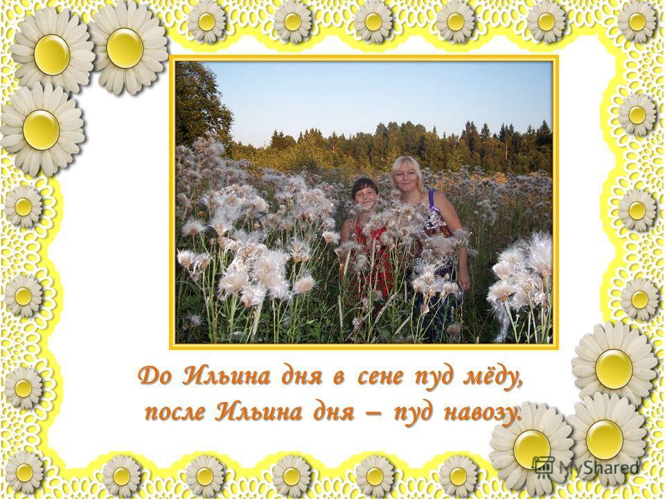 До Ильина дня в сене пуд мёду, после Ильина дня – пуд навозу.