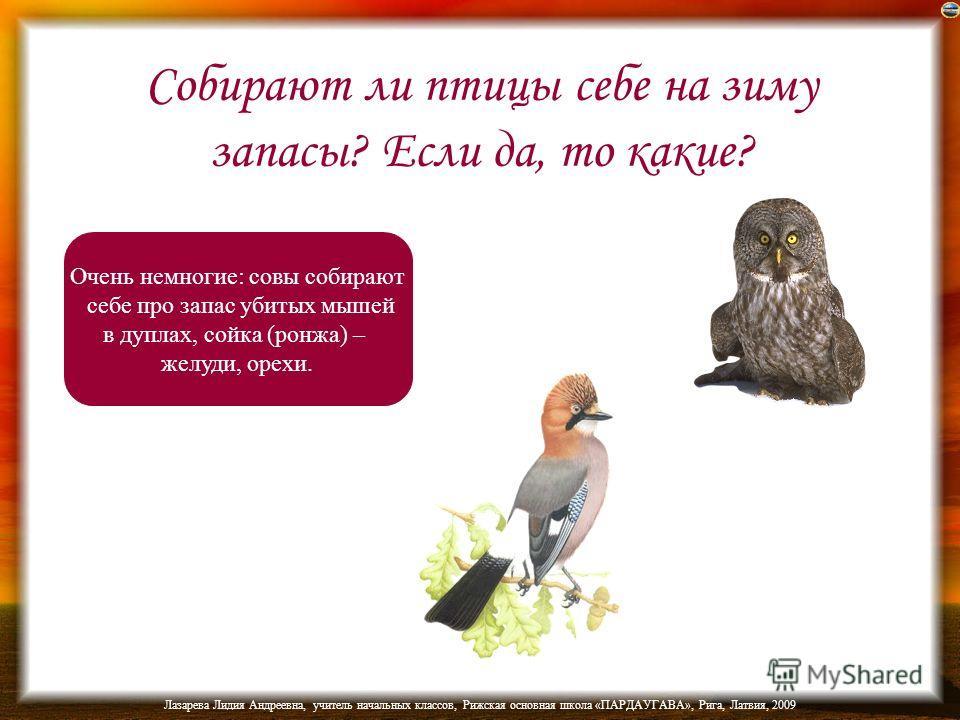 Лазарева Лидия Андреевна, учитель начальных классов, Рижская основная школа «ПАРДАУГАВА», Рига, Латвия, 2009 Какие птицы весной бормочут:
