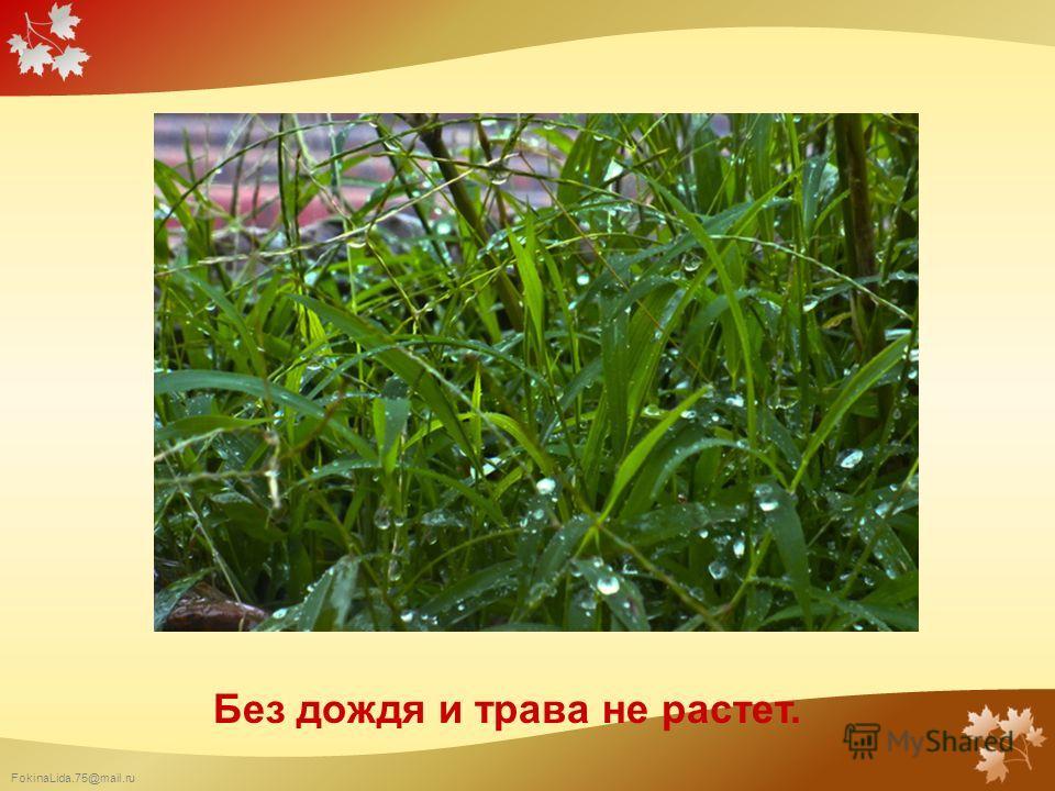 FokinaLida.75@mail.ru Без дождя и трава не растет.