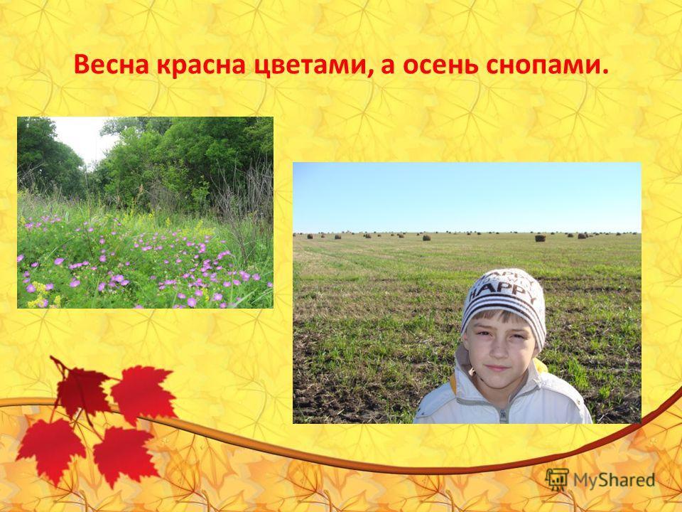 Весна красна цветами, а осень снопами.