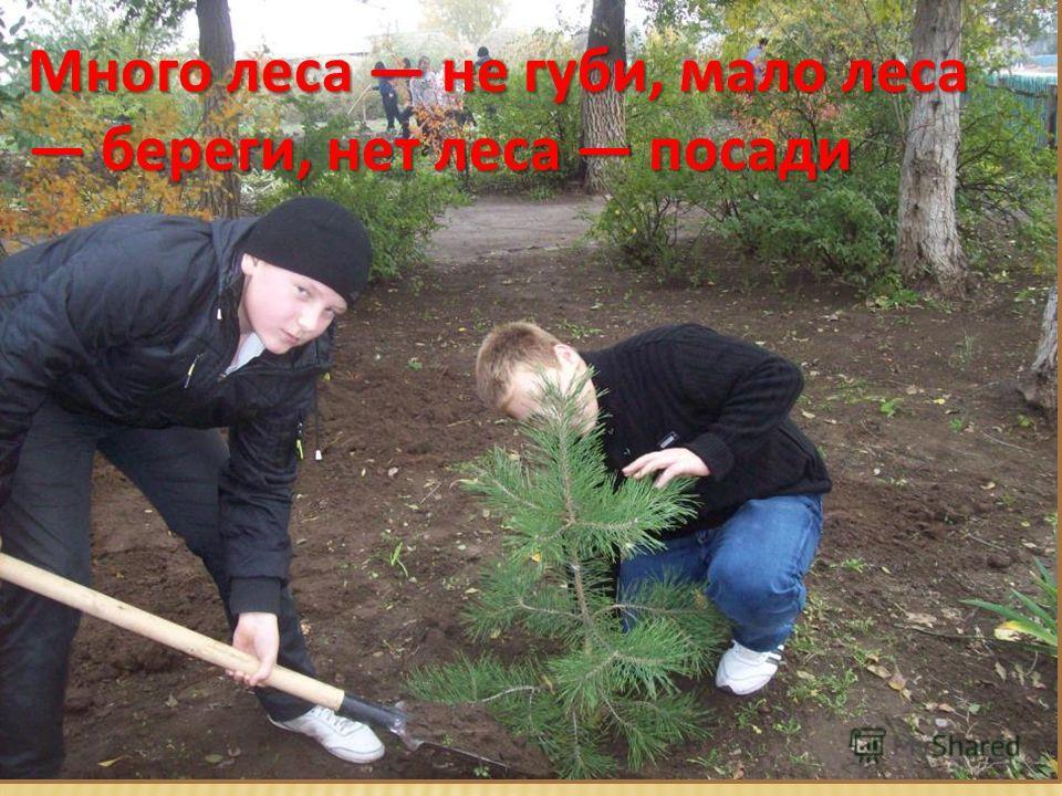Много леса не губи, мало леса береги, нет леса посади